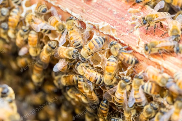 closeup of the worker bees on beehive