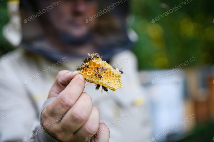 Man beekeeper holding honeycomb with bees in apiary