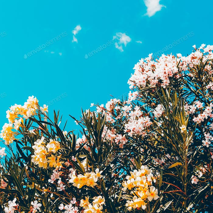 Flowers and sky. Minimal style