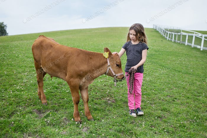 Girl (4-5) standing next to calf