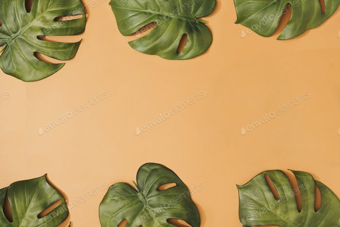 Creative composition made with tropical monstera leaves on pastel orange background.