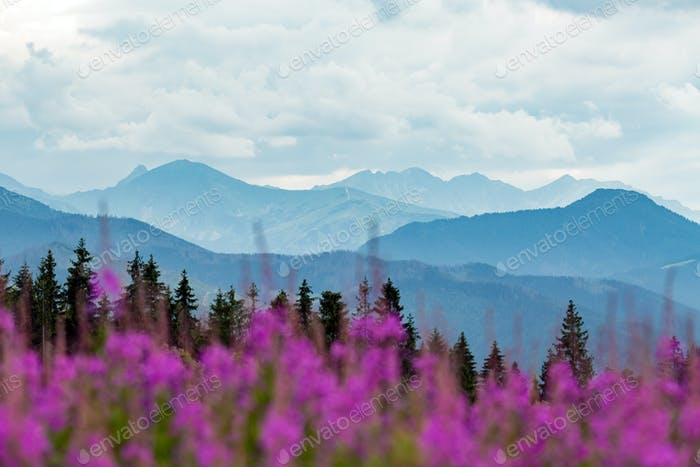 Inspiring Mountains Landscape, beautiful summer day in Tatras