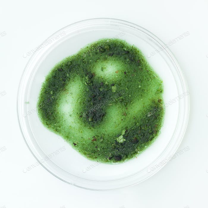 green mold in a petri dish