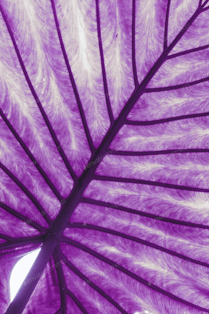 Close Up Leaves Leaf Of Plant. Toned Photo In Ultra Violet Color