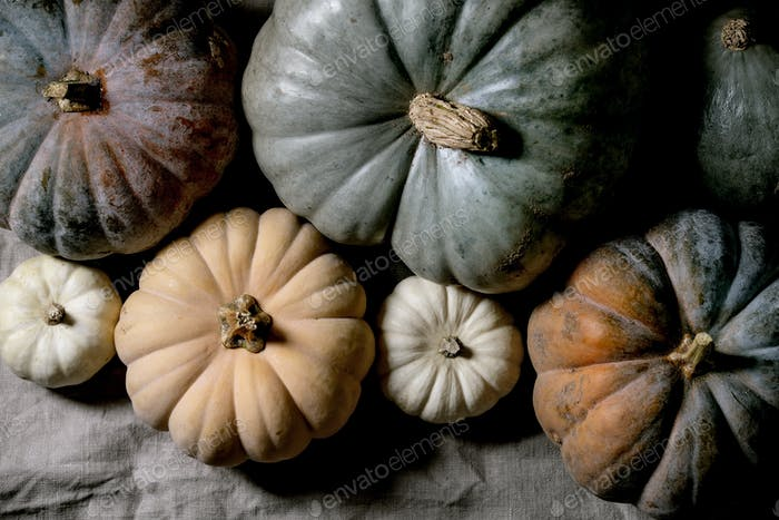 Colorful pumpkins collection on linen tablecloth. Flat lay