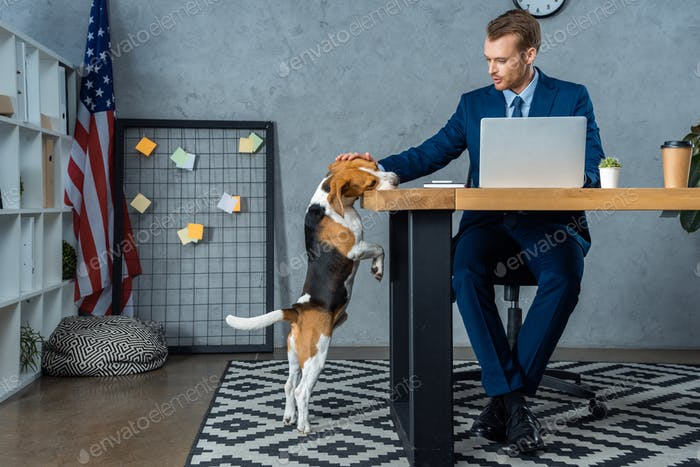 Cheerful Businessman Working at Table With Laptop And Touching Beagle Standing Near in Modern Office