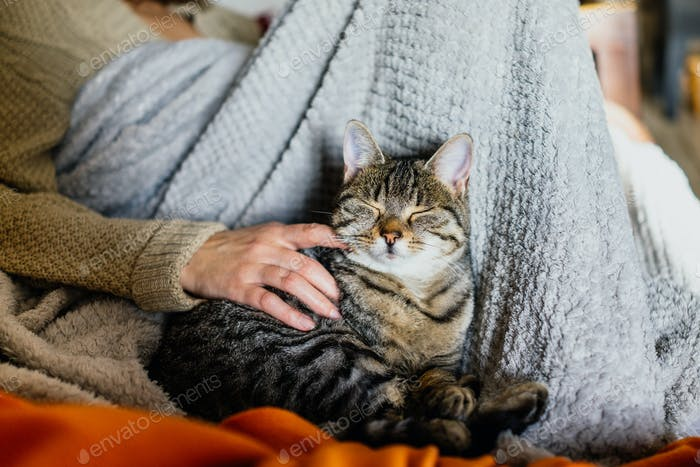 Katze auf einer Couch