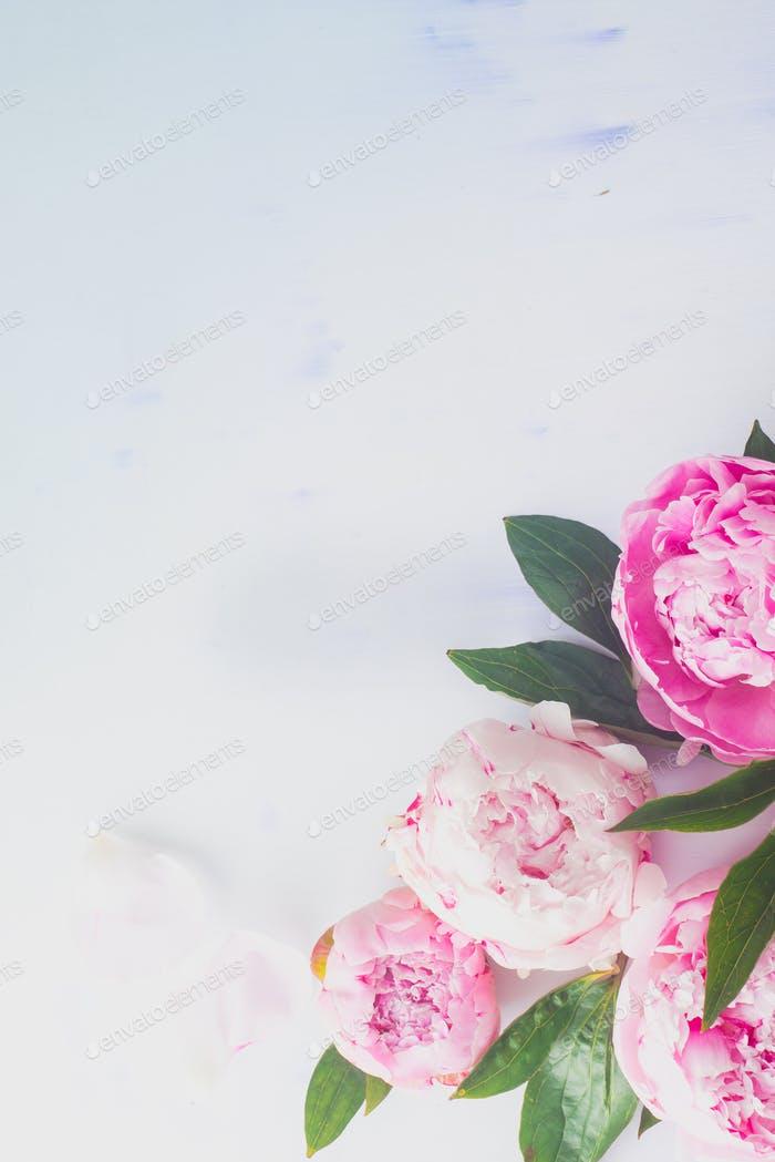 Minimal styled flatlay with peony flowers, petals and leaves on a pastel background with copy space