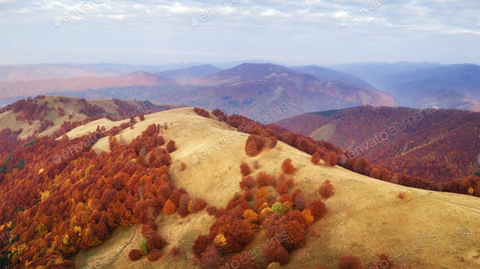 Autumn mountains and red beech forest