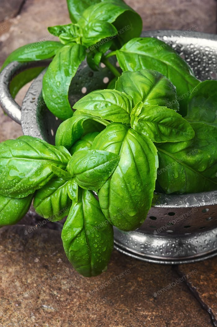 fresh green basil leaves