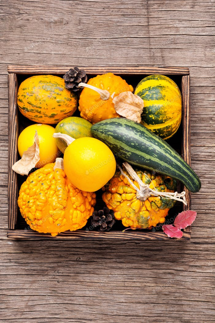 Diverse assortment of pumpkins