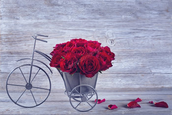 Red rose in bicycle vase