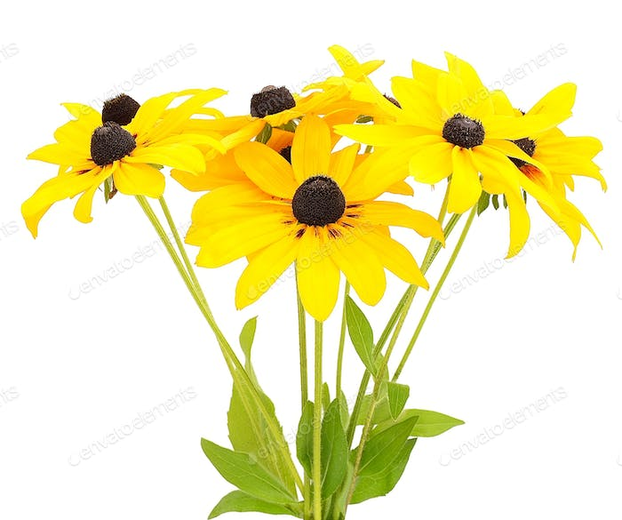 Bouquet of yellow rudbeckia flowers