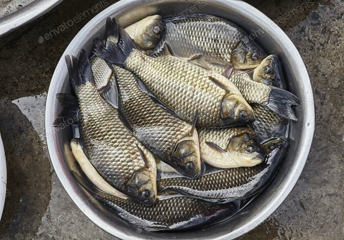 Fresh carps in a aluminum bowl on a street