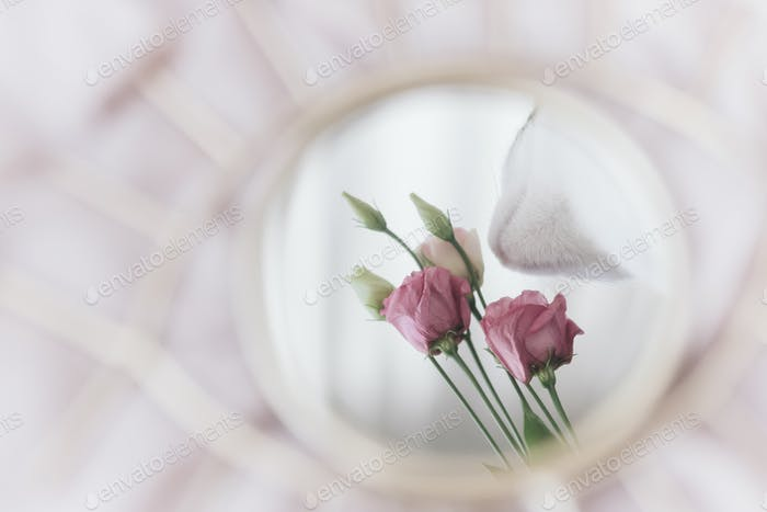 Beautiful kitty smelling eustoma flower reflection in mirror on soft fabric. Mental health and soul