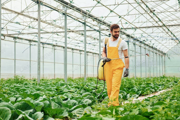 Young greenhouse worker in yellow uniform watering plants by using special equipment