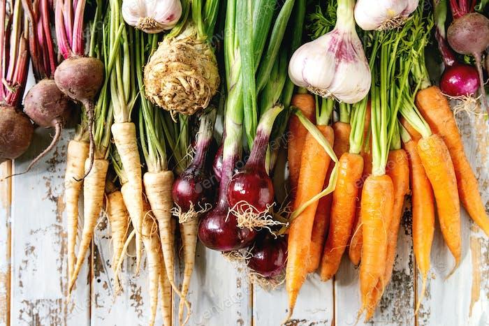 Variedad de hortalizas de raíz
