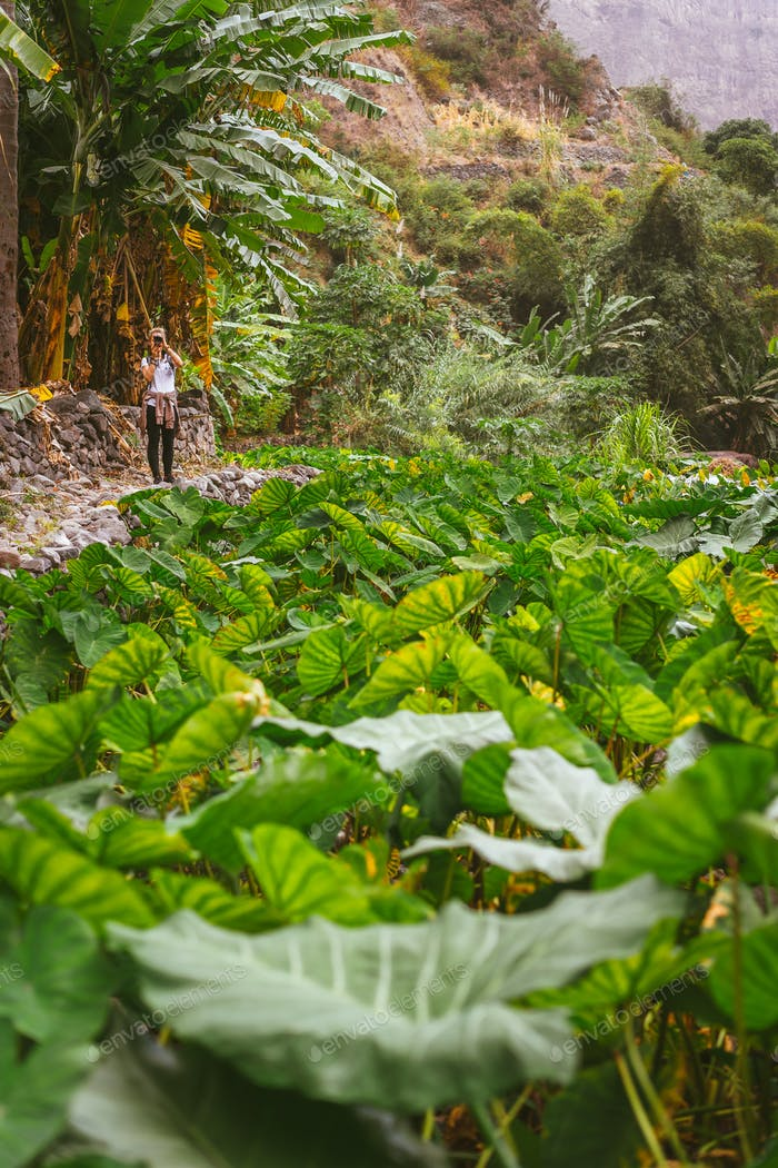 Girl making photo of a lotus plants in lush green valley on the bottom of a mountain. Santo Antao