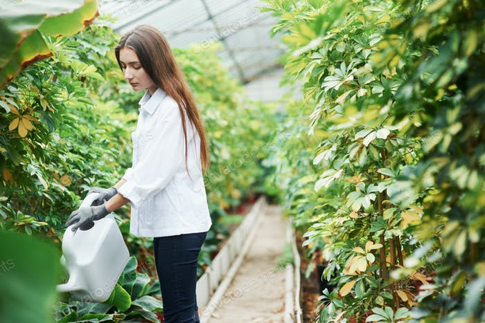 Process of watering the plants in greenhouse by beautiful young brunette