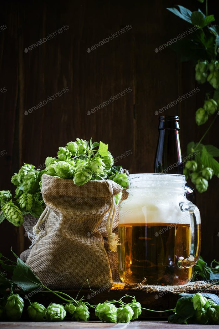 Beer with foam in a glass jar, brown bottle and cones of fresh green hop