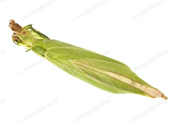 Frischer Mais auf dem Kolben ungeschält