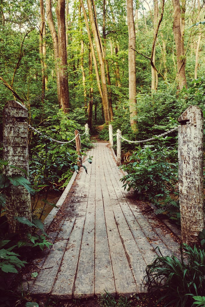 Bridge on the forest