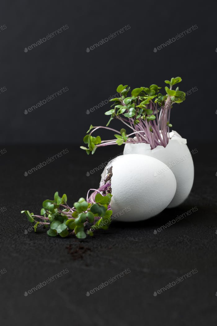 Fresh cress-salad in the eggshell on a black background.