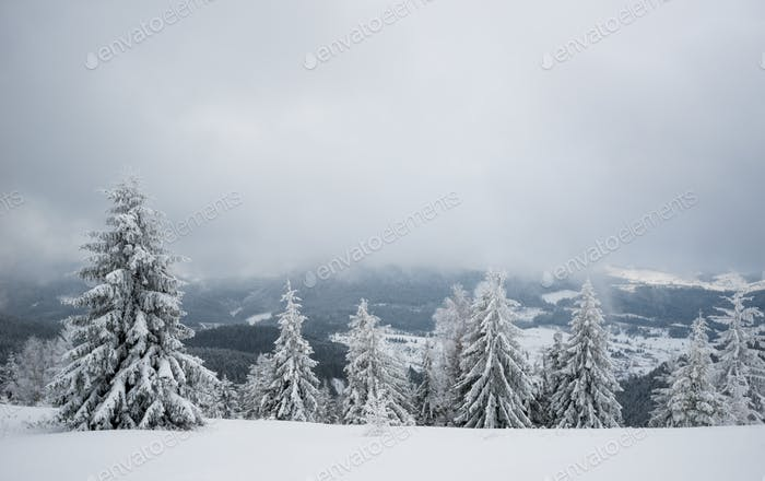 Snowy hill with fir trees and snow