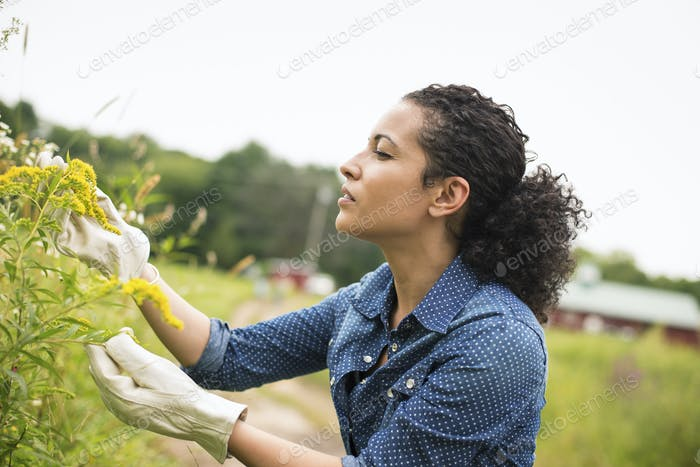 Working on an organic farm.