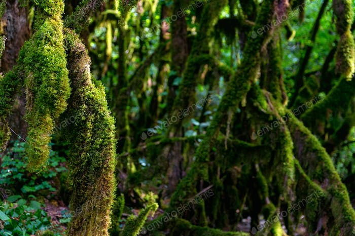 Close up of moss growing on tree branches