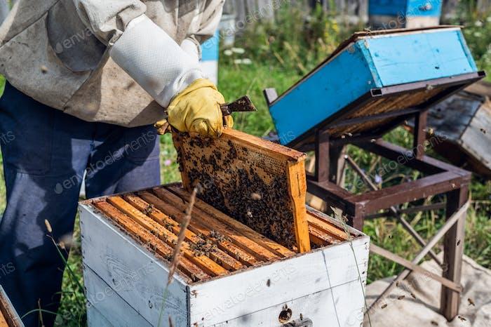Imker inspiziert seine Honigbienen in weißen Bienenstöcken auf einem Bauernhof