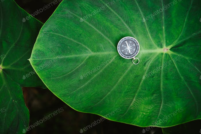 Orientation concept - Analogical Compass laying on the huge deep green colored lotus leaf