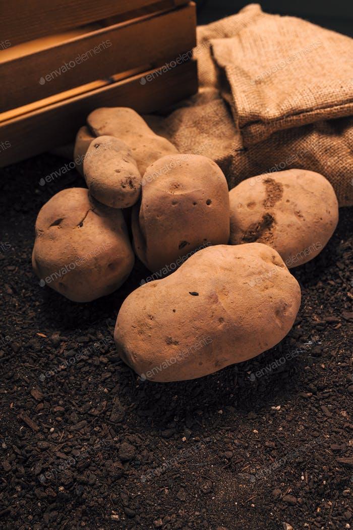 Organic potato tuber pile