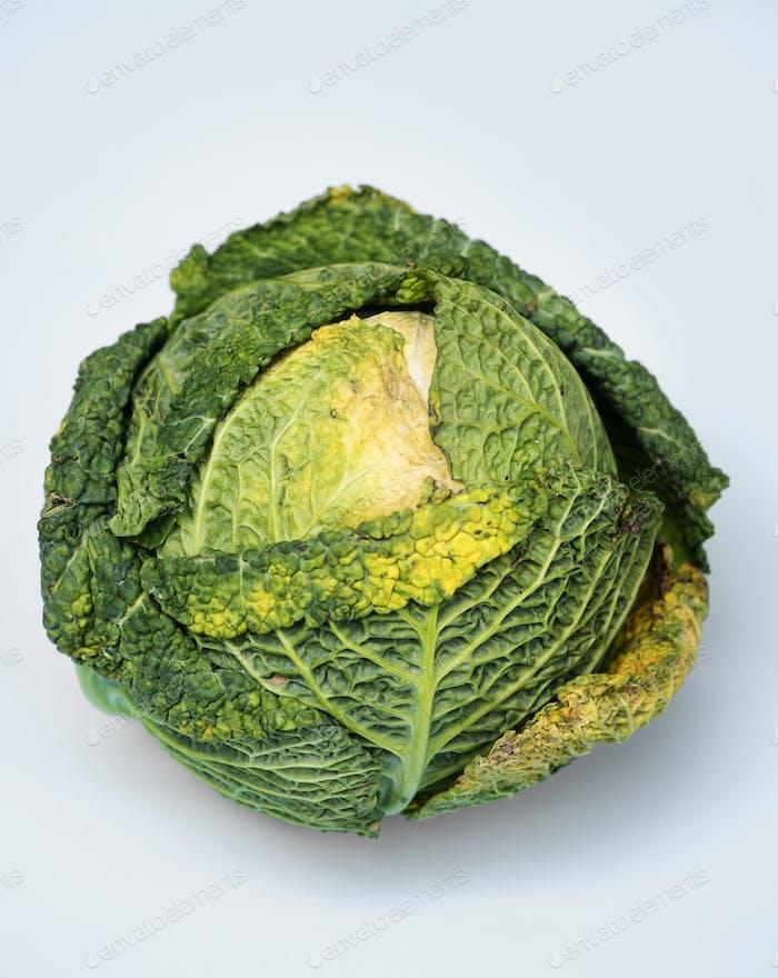 Closeup of fresh organic cabbage
