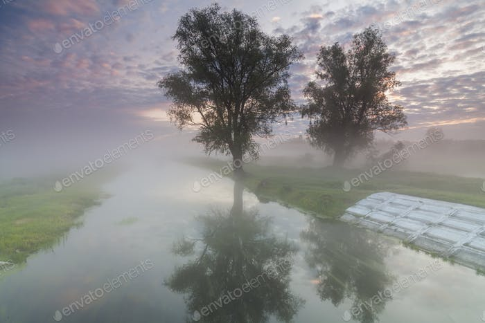 Mysterious misty dawn at the small river