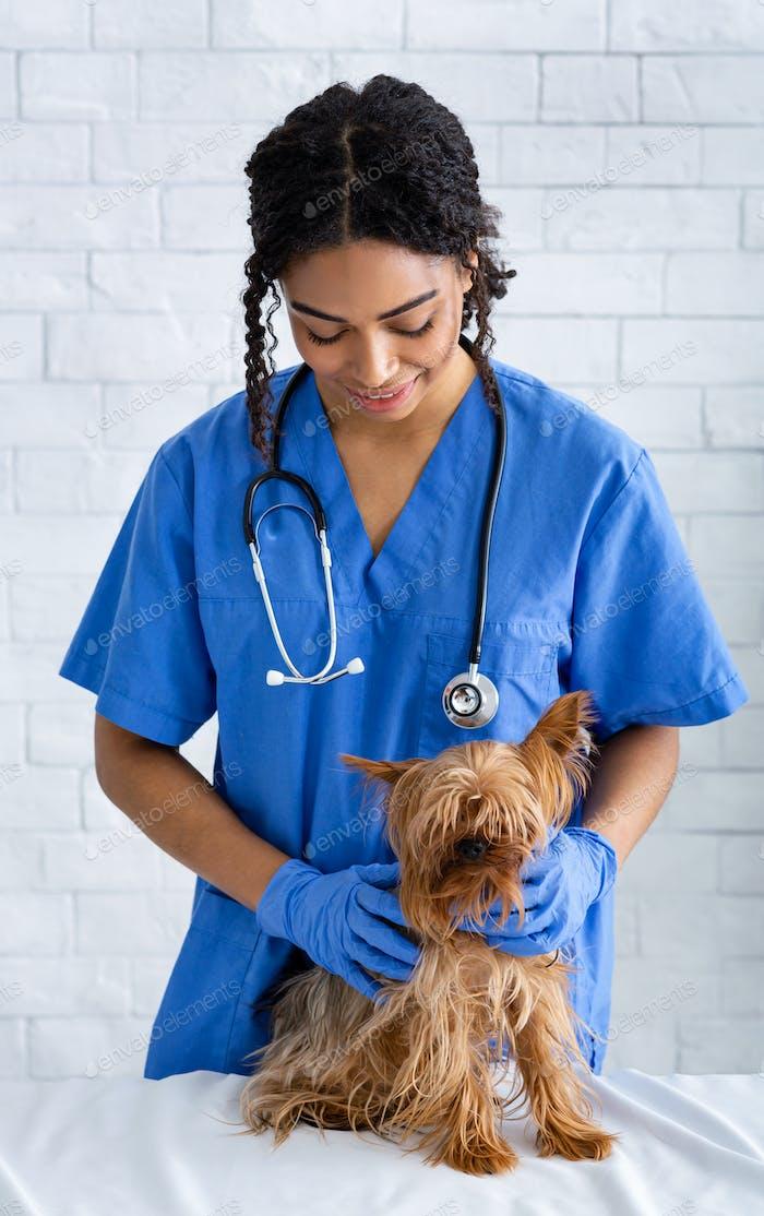 African American veterinary doc examining little patient in vet clinic