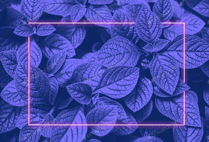 Lebendiges blaues Blatt-Layout und rosa Neon leuchtender Rahmen.Vapor Wave Retro-Textur.
