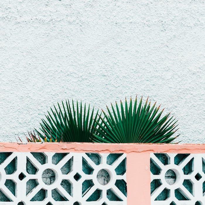 Pflanzen auf rosa Modekonzept. Palmblatt auf Wandhintergrund