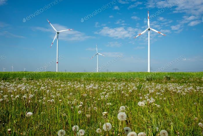 Wind power plants and dandelion flowers