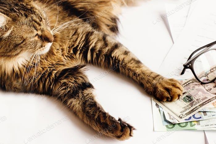 niedliche Katze sitzend auf dem Tisch mit Brille Telefon und Geld