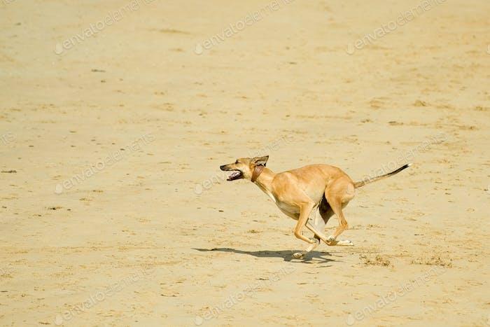 бегать на пляже