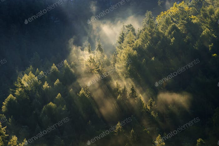 Beautiful foggy forest during autumn sunrise, Saxon Switzerland, Germany