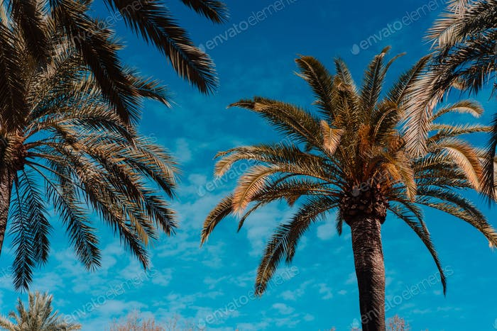 photo of tropical palm trees