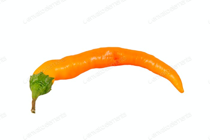 Orange chilli peppper on a white background