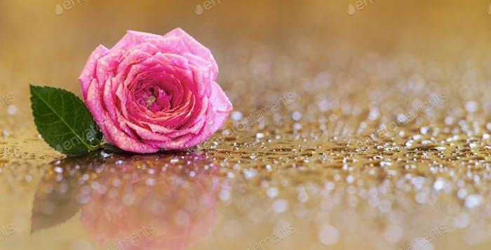 Pink rose flower greeting card, banner