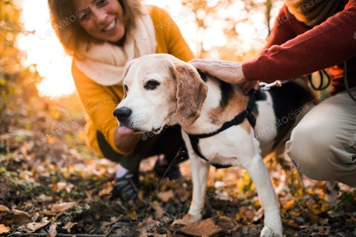 Ein älteres Paar mit einem Hund in einer Herbstnatur bei Sonnenuntergang, Spaß haben.