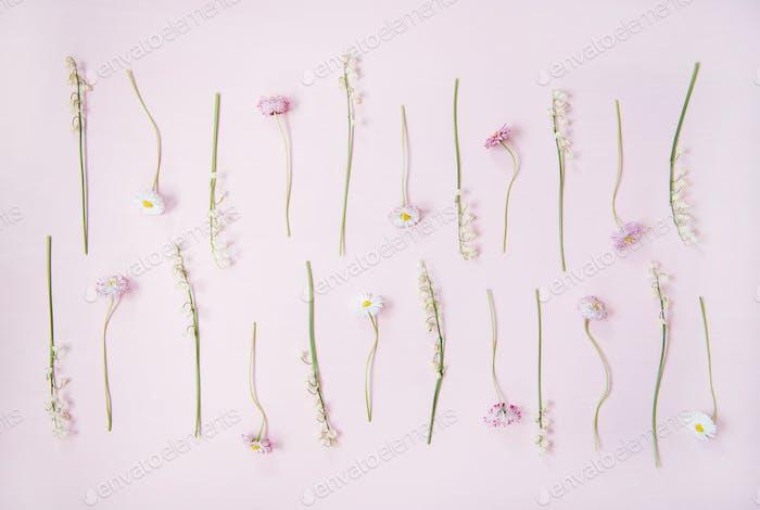Flat-Lay von Maiglöckchen und Gänseblümchen über pastellrosa Hintergrund