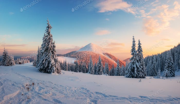 Яркий зимний сцена с снежные деревья