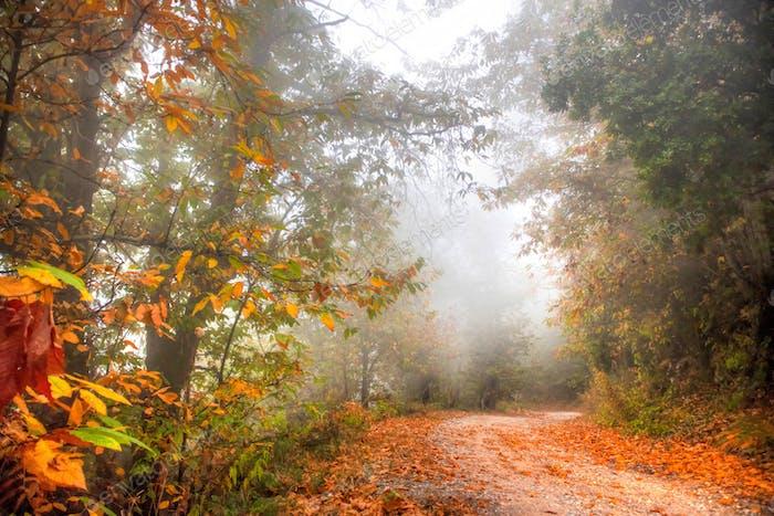 Straße im Wald im Herbst