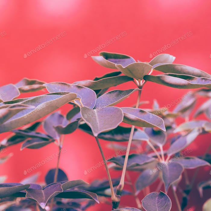 Plant on pink. Green minimal style